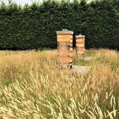 ENG 140720 Hives
