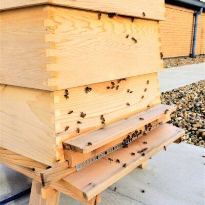 LEX 280121 Hive 2 bees