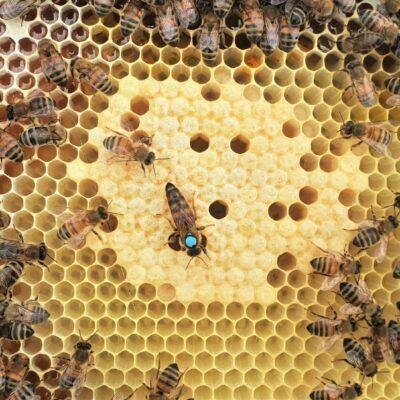 Segro OCK 060720 Hive 2 brood