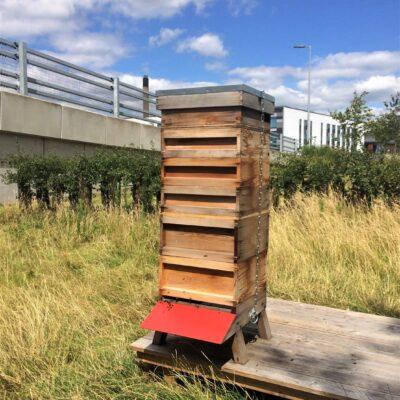 Segro STE 290720 Hive 2