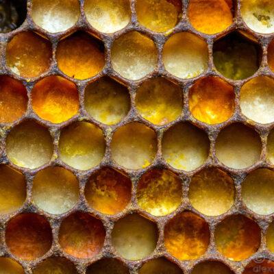 pollen in cells